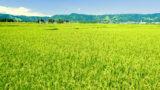 新潟県の資金調達に強い専門家3選 新潟で融資や資金調達に強い専門家を紹介 9の画像