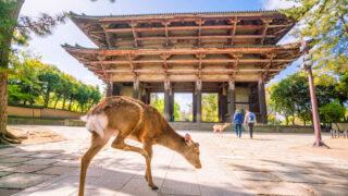 奈良県の資金調達に強い専門家 奈良で融資や資金調達に強い専門家を紹介 14の画像