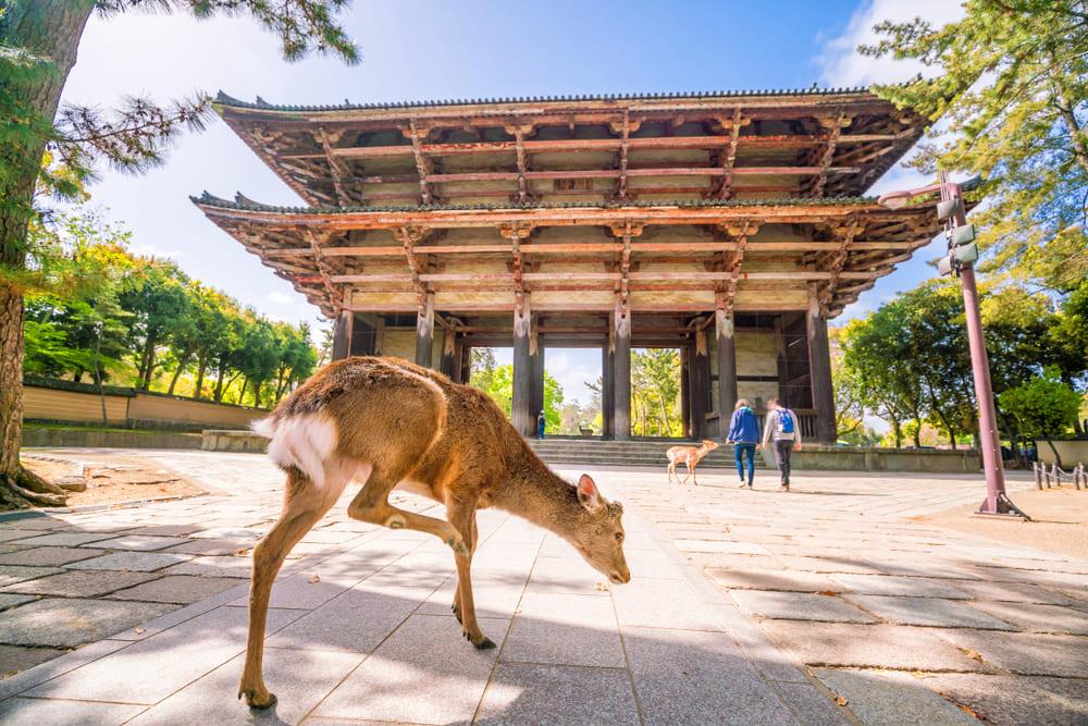 奈良県の資金調達に強い専門家 奈良で融資や資金調達に強い専門家を紹介